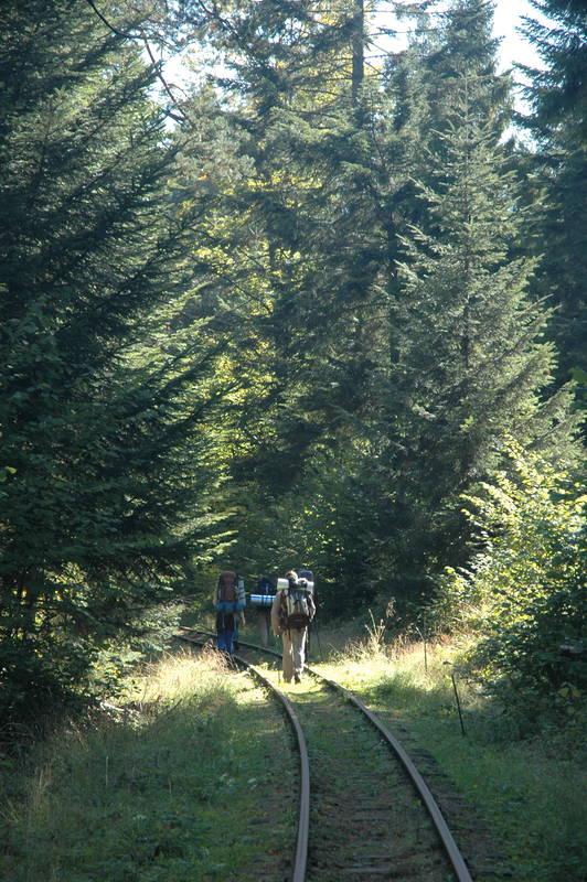 Tory Bieszczadzkiej Kolejki Leśnej w Balnicy